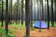 BLUE TENT IN LODGEPOLE PINES, CYPRESS HILLS PROVINCIAL PARK