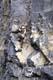 MOUNTAIN CLIMBER ON ROCK FACE, JASPER NATIONAL PARK