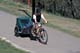 BICYCLIST WITH CHILD TRAILER, SASKATOON