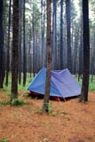 REC CAM MIS  SK     1507003D  VT           TENT IN LODGEPOLE PINESCYPRESS HILLS PROV. PK.   07/16© CLARENCE W. NORRIS      ALL RIGHTS RESERVEDACTIVITIES;BOREAL;BULLETINS;CAMPING;CYPRESS_HILLS_PP;LODGEPOLE_PINE;OUTDOORS;PINES;PLATEAU;PLAINS;PP_;PRAIRIES;RECREATION;SASKATCHEWAN;SHELTERS;SK_;SUMMER;TENTS;TREES;VTLLONE PINE PHOTO              (306) 683-0889