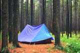 REC CAM MIS  SK   WS21312D    TENT IN LODGEPOLE PINES CYPRESS HILLS PROV. PARK 07/..© WAYNE SHIELS                 ALL RIGHTS RESERVEDACTIVITIES;BOREAL;CAMPING;CYPRESS_HILLS_PP;LODGEPOLE_PINE;OUTDOORS;PINES;PLAINS;PLATEAU;PP_;PRAIRIES;RECREATION;SASKATCHEWAN;SCENES;SHELTERS;SK_;SUMMER;TENTS;TREESLONE PINE PHOTO               (306) 683-0889