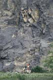 REC CLI MOU  AB     1406321D  NMR  VTMOUNTAIN CLIMBER ON ROCK FACEJASPER NATIONAL PARK      07/05© CLARENCE W. NORRIS      ALL RIGHTS RESERVEDAB_;ALPINE;ACTIVITIES;ALBERTA;BULLETINS;CORDILLERA;DANGER;GROUPS;JASPER_NP;MALE;MOUNTAIN_CLIMBING;NP_;OUTDOORS;PEOPLE;RECREATION;ROCKS;SAFETY;SCALE;SPORTS;SUMMER;VTLLONE PINE PHOTO              (306) 683-0889