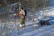 MAN ON SNOWSHOES PULLING TOBOGGAN, WAKAW