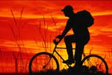 REC BIC MIS  SK  CWN02A036D  (DC)  MRBOY BICYCLING AT SUNSET WITH GRASS IN FOREGROUNDOSLER                                   08/27              © CLARENCE W. NORRIS         ALL RIGHTS RESERVEDACTIVITIES;BICYCLES;BICYCLING;COMPOSITE;MALE;MICHAEL;MR_;OUTDOORS;PEOPLE;PLAINS;PRAIRIES;RECREATION;SASKATCHEWAN;SILHOUETTE;SK_;SKY;SUMMER;SUNSETS;TEENSLONE PINE PHOTO                  (306) 683-0889