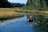 REC CAN MIS  SK     1512316D  MR   SOLO CANOEIST ON CREEKNEAR STANLEY MISSIONLAC LA RONGE PROV. PK.    09/09© CLARENCE W. NORRIS      ALL RIGHTS RESERVEDACTIVITIES;AUTUMN;BOREAL;CANOEING;CANOES;CREEKS;LAC_LA_RONGE_PP;LIFEJACKETS;MALE;MR_;OUTDOORS;PARKLAND;PARKS;PEOPLE;PP_;RECREATION;SAFETY;SASKATCHEWAN;SHIELD;SK_;STANLEY_MISSION;WATER  LONE PINE PHOTO              (306) 683-0889