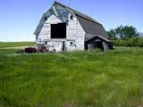 STR BAR MIS  SK  CWN02D0626DWHITE BARN, WIND BLOWING IN GRASSSTEWART VALLEY                    07/02© CLARENCE W.  NORRIS          ALL RIGHTS RESERVEDARCHITECTURE;BARNS;BUILDINGS;FARMING;GRASS;PLAINS;PRAIRIES;RURAL;SASKATCHEWAN;SCENES;SK_;STEWART_VALLEY;STRUCTURES;SUMMER;WINDLONE PINE PHOTO                  (306) 683-0889
