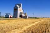 STR ELE POO  SK     1510361D      SASK WHEAT POOL ELEVATOR AND SWATHMACRORIE                           09/27© CLARENCE W. NORRIS      ALL RIGHTS RESERVEDBUILDINGS;CROPS;ELEVATORS;FARMING;FIELDS;GEOMETRY;MACRORIE;PLAINS;POOL;PRAIRIES;RURAL;SASK_WHEAT_POOL;SCENES;SASKATCHEWAN;SK_;STRUCTURES;SUMMER;SWATHS;TOWNS LONE PINE PHOTO              (306) 683-0889