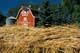 WHEAT SWATH FRAMING RED BARN, SASKATOON